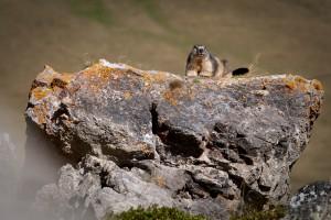 face au Parc National des Ecrins
